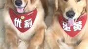 陳翔六點半:公交車上來了一個小伙,對著寵物狗說我愛你!