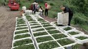 建万亩花椒种植基地,打造调料之乡!这场面你有见过的吗?